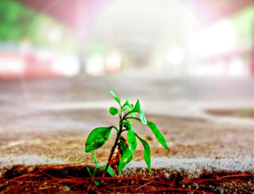 رشد یعنی حذف اصطکاک