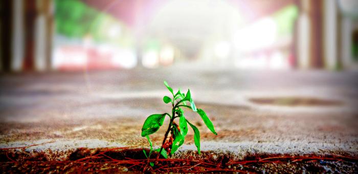 sprout growth friction startup success entrepreneur mahmood bashash موفقیت استارتاپ نوپا رشد